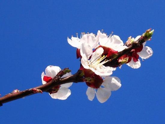 Finally Spring.jpg