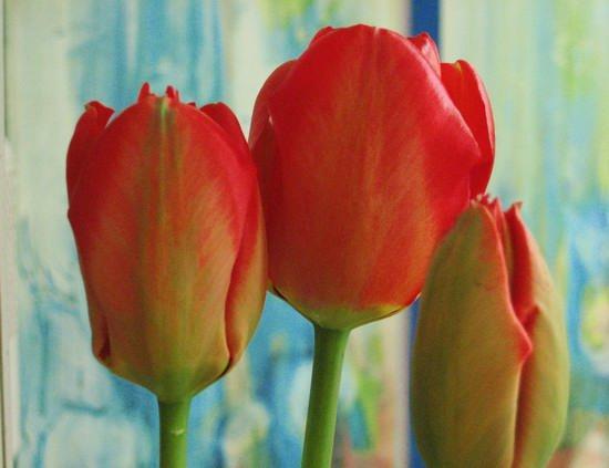 Tulips II.jpg