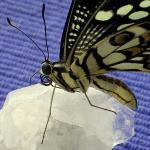 Butterfly II.jpg