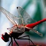 Dragonfly III.jpg