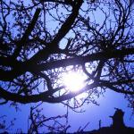 Joy of the Tree.jpg