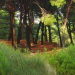 Pine Forest II.jpg