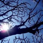 Tree and Sun.jpg